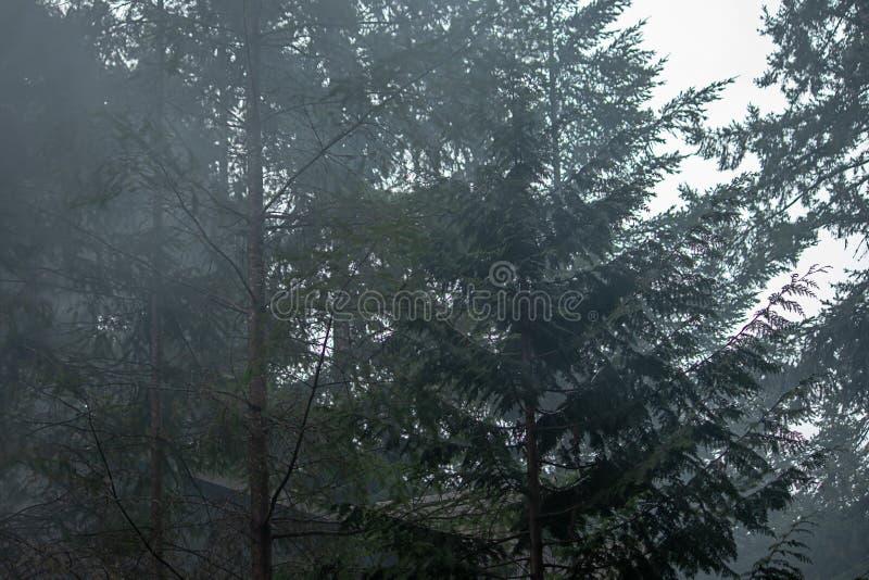 Rauch von einem Lagerfeuer hinterlässt Spuren des weißen Rauches in Kiefer lizenzfreie stockfotografie