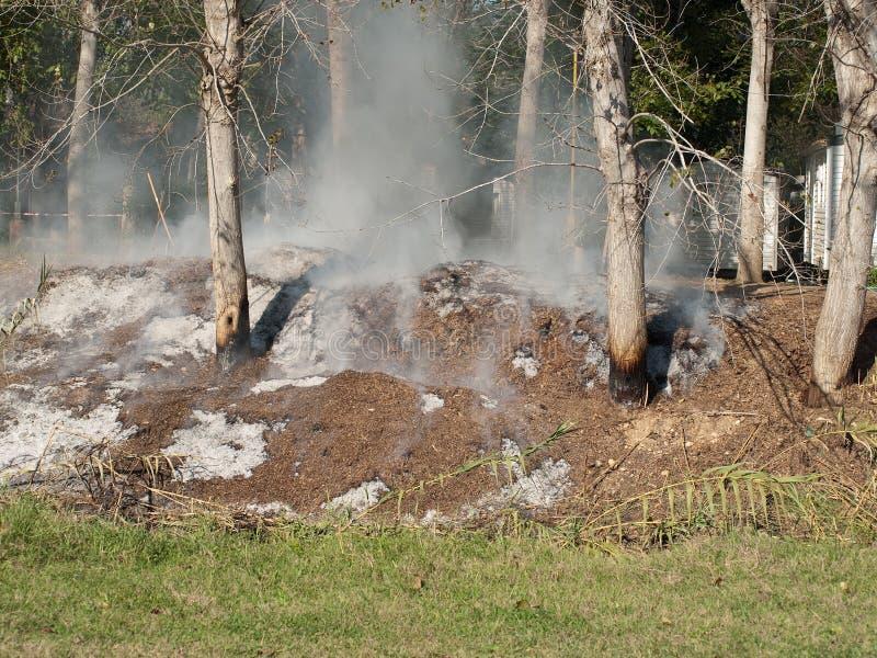 Rauchende Bäume lizenzfreies stockbild