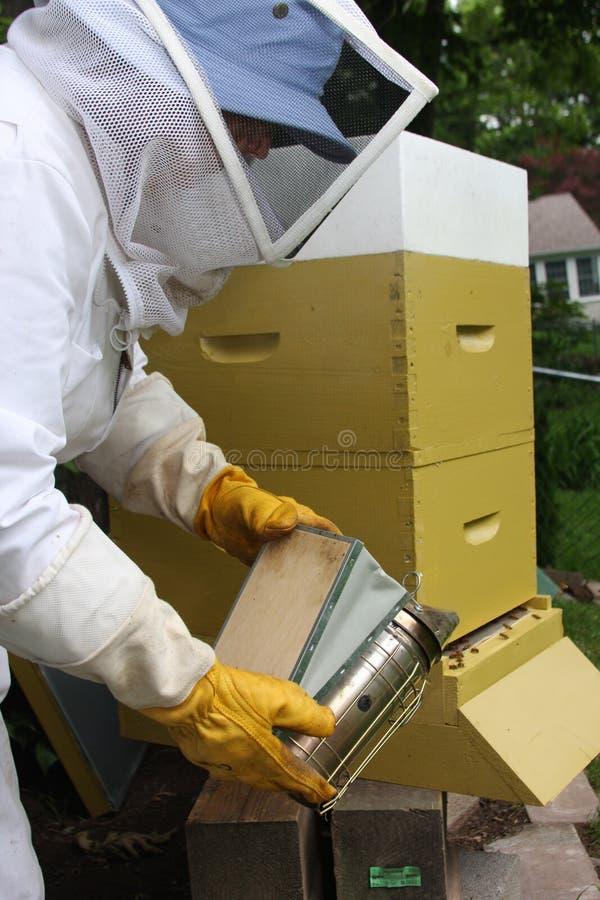 Rauchende Bienen des Imkers lizenzfreies stockbild