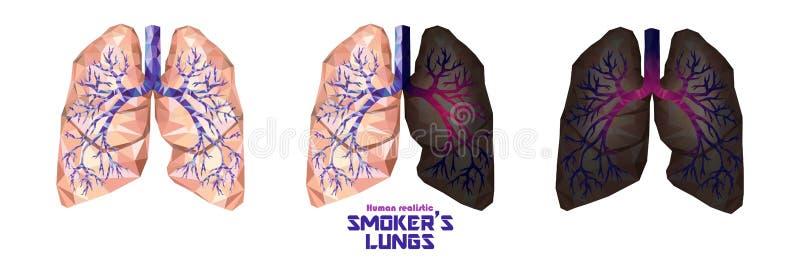 Raucher ` s Lungen stellten in niedriges Poly ein Gesunde Lungen, kranke Lungen, cance lizenzfreie abbildung