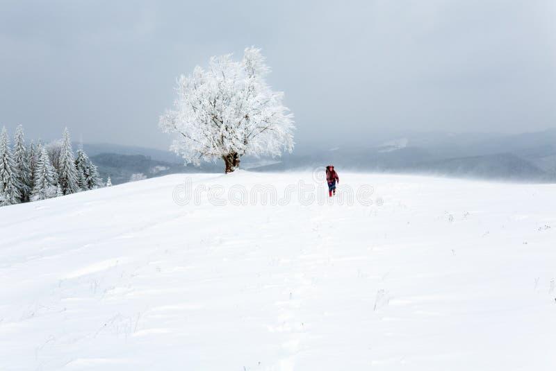 Raue schneebedeckte Landschaft des Winters stockfotos