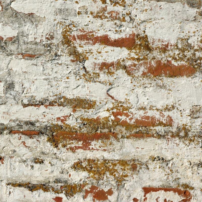 Raue Wand des roten Backsteins mit weißem Gips-Rahmen-Hintergrund lizenzfreies stockfoto