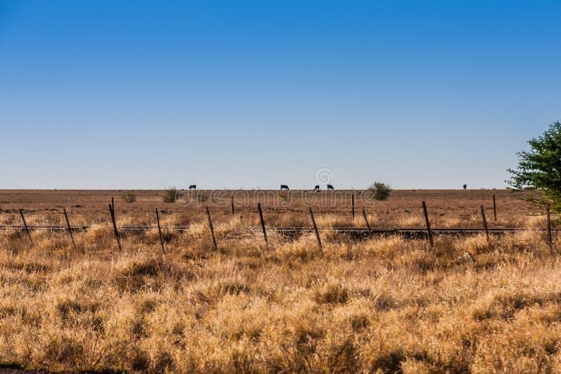 Raufutterfresser im australischen Hinterland lizenzfreie stockfotografie