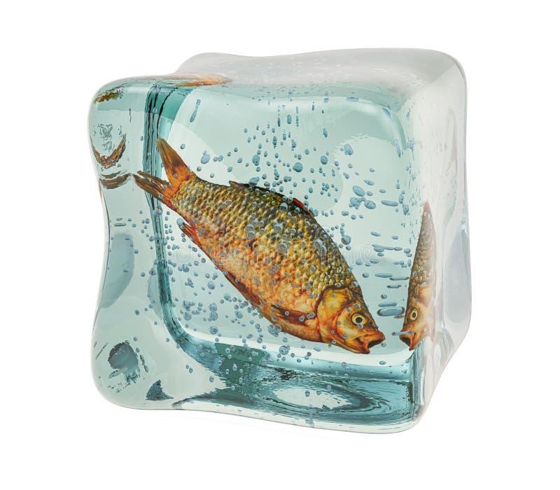 Rauwe karper, bevroren vis in ijskubus, 3D-destructie royalty-vrije stock afbeeldingen