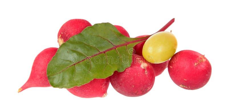 Ravanelli rosa freschi, foglia di verde della bietola e bacca gialla dell'uva isolati su fondo bianco immagini stock