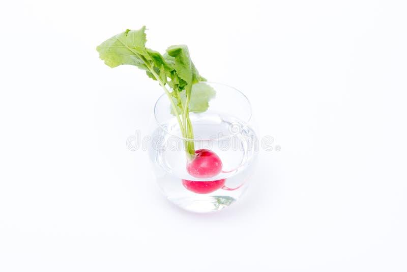 Ravanello in un bicchiere d'acqua immagine stock