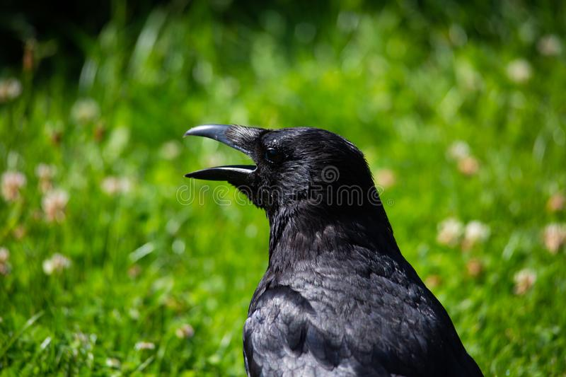 Rave in the garden, animal. Nature royalty free stock photo