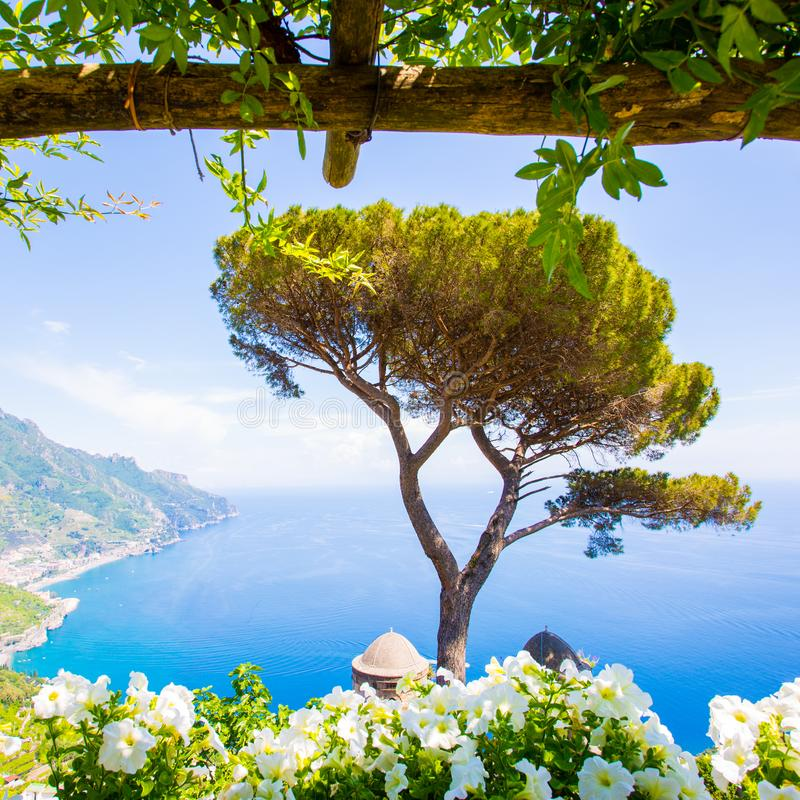 Ravello, терраса над морем, цветки стоковое фото
