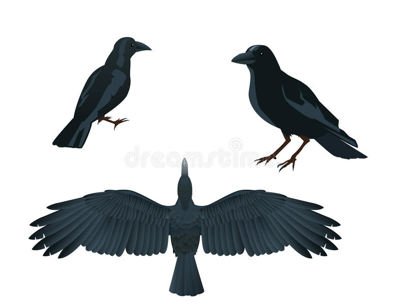 Download Raven Stock Photo - Image: 11853540
