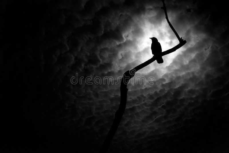 Raven. A raven at rest on a branch with an abnormally turbulent sky