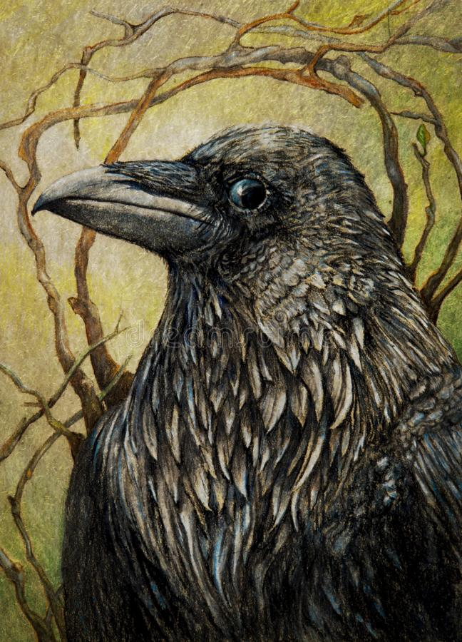 Raven or black crow stock illustration