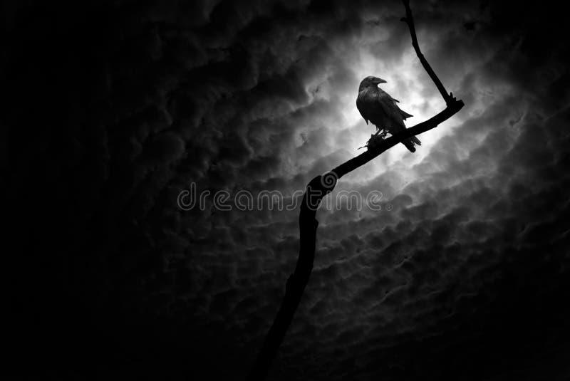 Raven, Death Valley image libre de droits