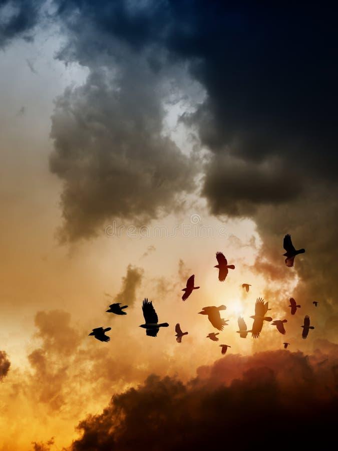 Raven in donkere hemel stock foto's