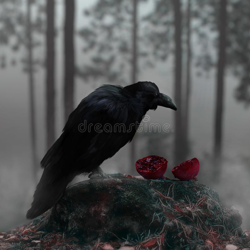 Raven In en Misty Forest With en blodig röd granatäpple royaltyfri bild