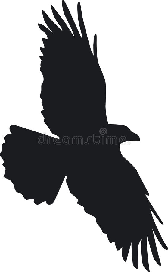 Raven flies stock photo