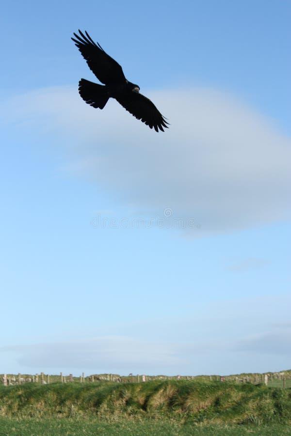 Raven Flying in Hemel in Ierland royalty-vrije stock afbeeldingen
