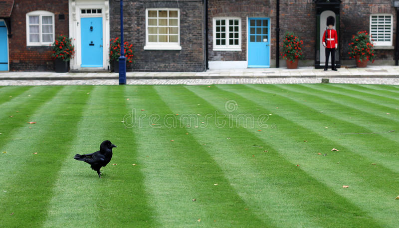 Raven and Guard at Tower of London stock photo