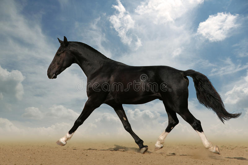 Raven horse in the desert royalty free stock images