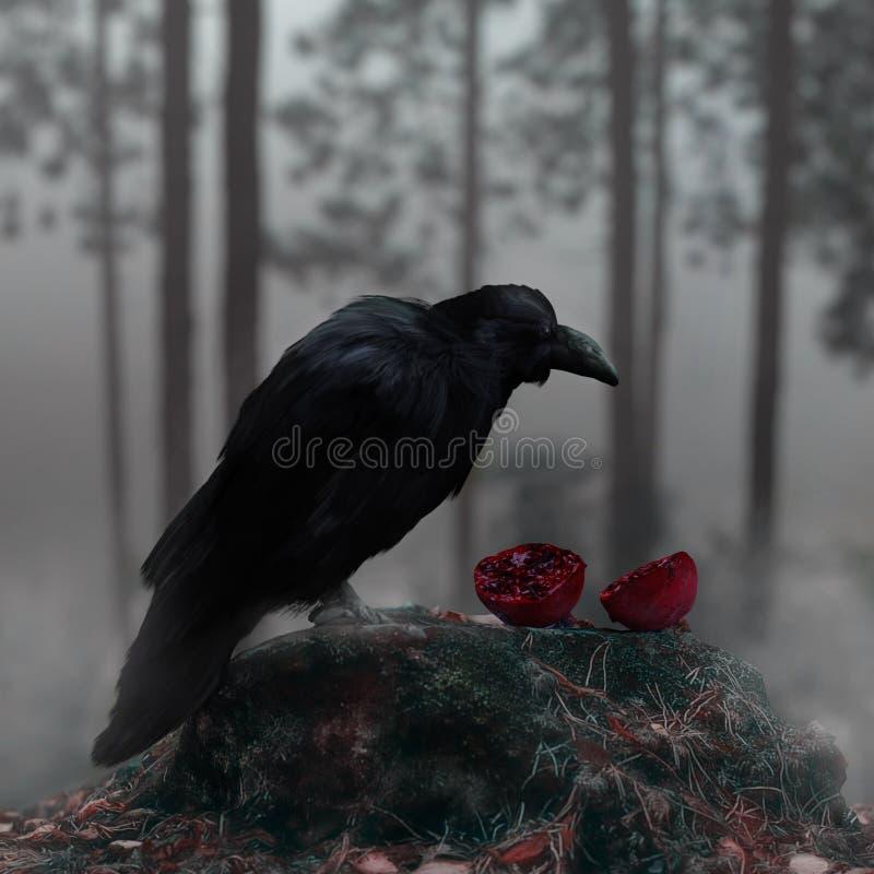 Raven In Misty Forest With ein blutiger roter Granatapfel lizenzfreies stockbild