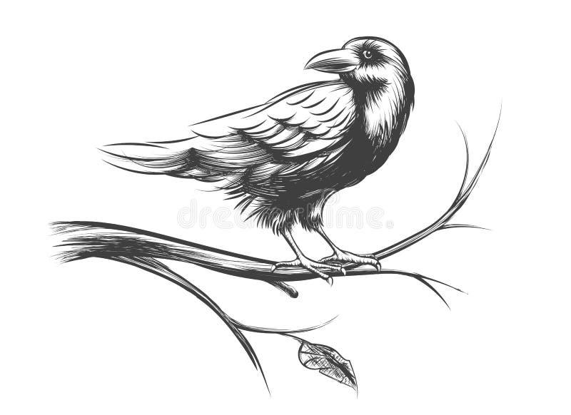 Raven o insieme nero di vettore di schizzi e delle siluette del corvo royalty illustrazione gratis