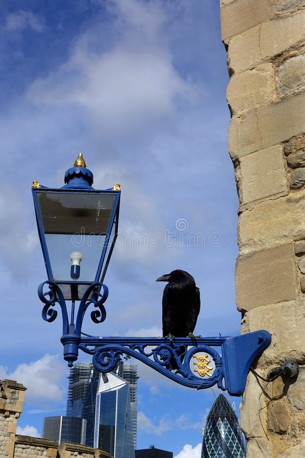 Free Raven Of The Tower Of London Royalty Free Stock Photo - 133822135