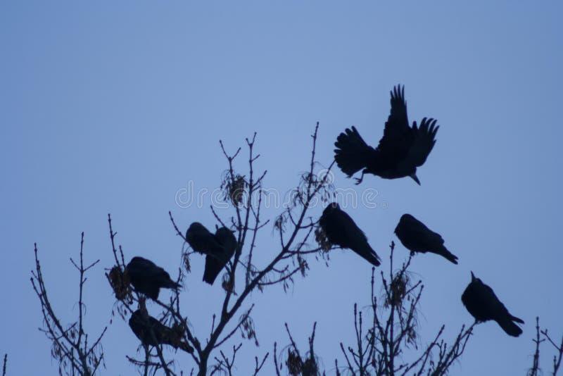 Raven op de boom stock fotografie