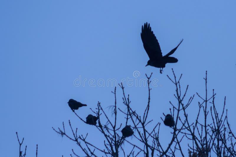 Raven op de boom royalty-vrije stock fotografie