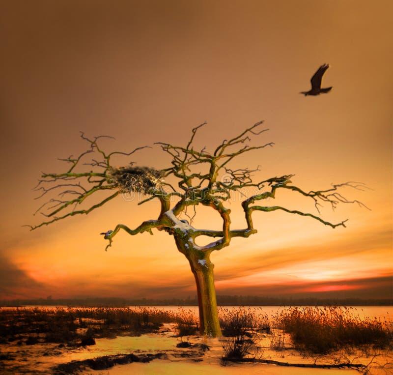 Download Raven returning home stock image. Image of endurance, expectancy - 6142133