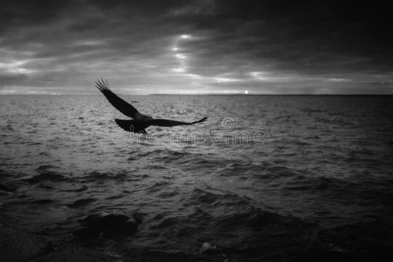 The Raven and the Sea royalty free stock photo