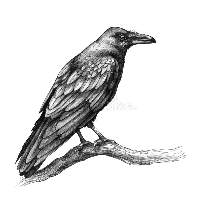 Raven Side View Pencil Drawing ilustração do vetor