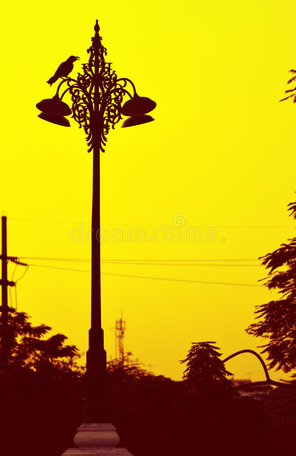 Download Raven on streetlamp. stock photo. Image of evening, streetlight - 37521194