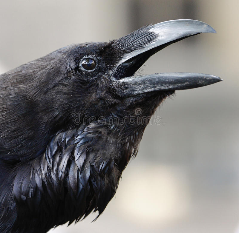 Raven In The Tower Stock Images