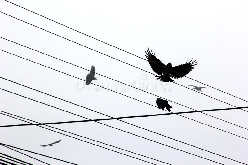 Download Ravens stock photo. Image of cable, clouds, dusky, connection - 27757224