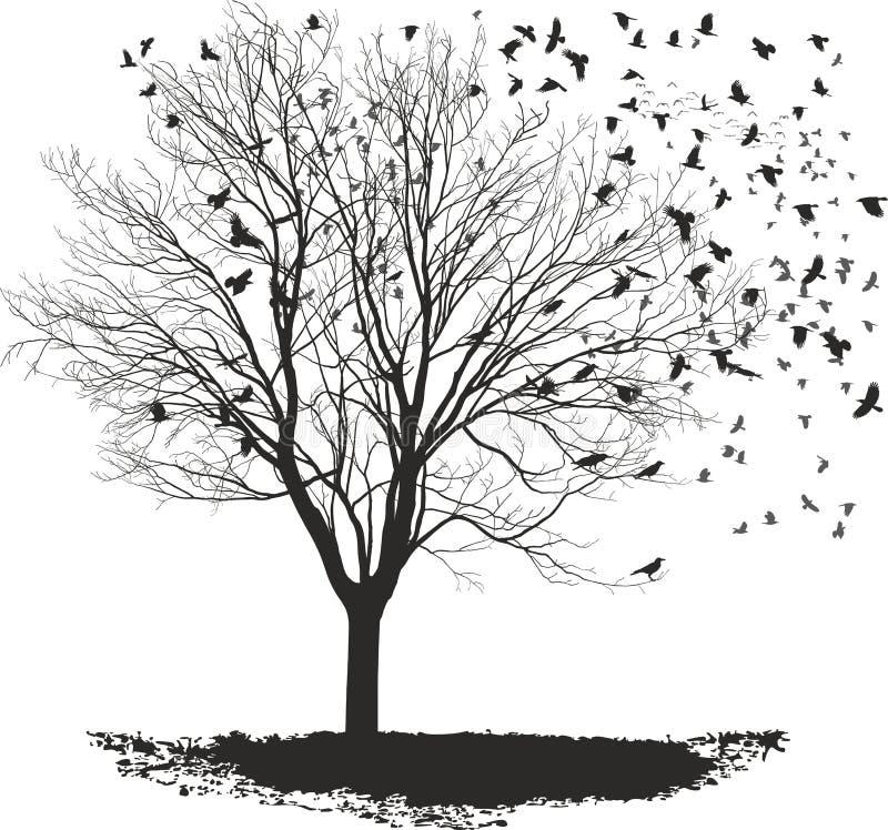 Ravens su un albero di acero immagine stock libera da diritti