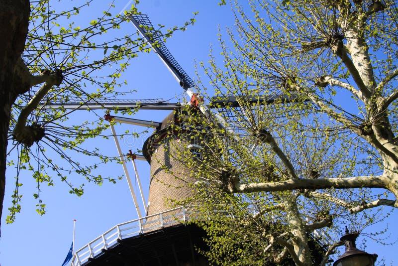 RAVENSTEIN, NEDERLAND - APRIL 21 2019: Weergeven op zeilen van oude windmolen door takken van een boom tegen wolkenloze blauwe he royalty-vrije stock foto's