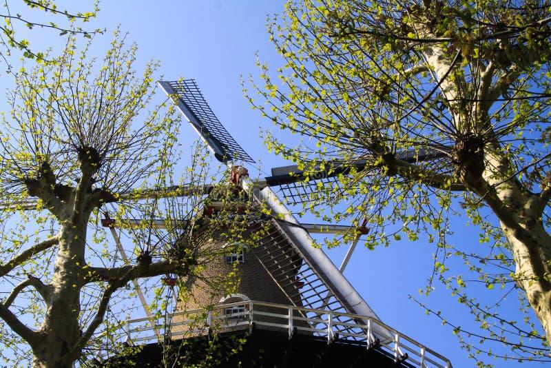 RAVENSTEIN, PAYS-BAS - 21 AVRIL 2019 : Vue sur des voiles de moulin à vent antique par des branches d'un arbre contre le ciel ble image libre de droits