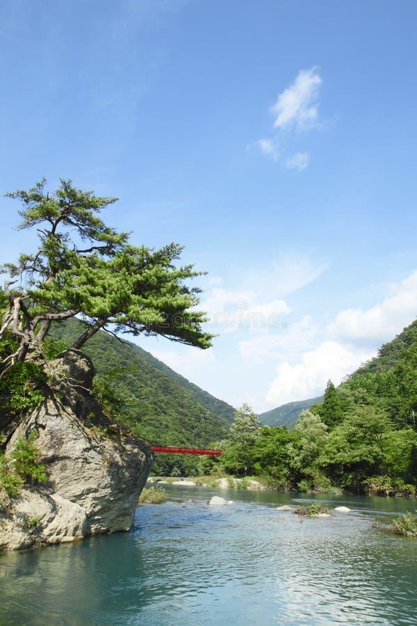 Ravijn Dakikaeri in Akita royalty-vrije stock foto