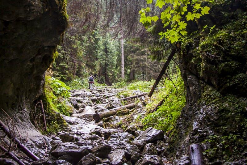 Ravin Cracow - Tatra nationalpark, Polen. arkivfoton
