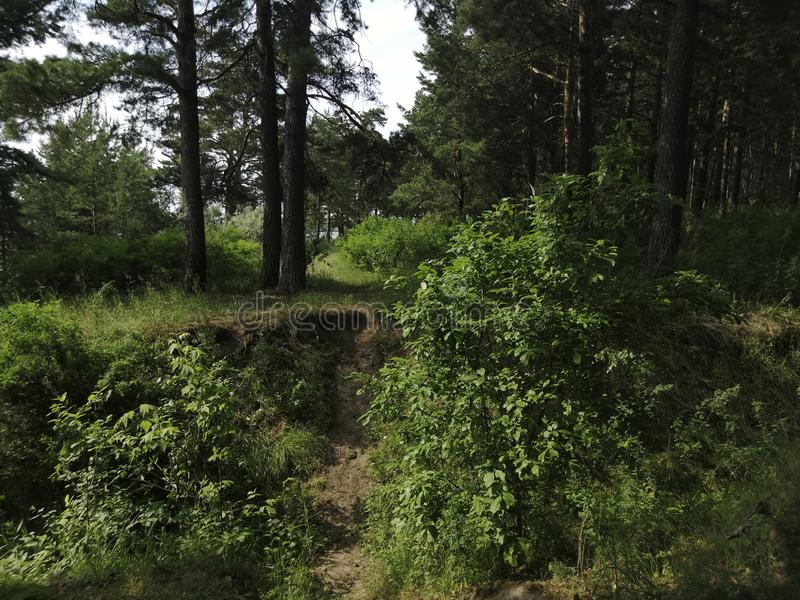 Ravin i mitt av en härlig prydlig skog arkivbilder
