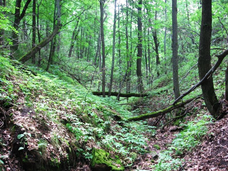 Download Ravine in forest. stock image. Image of beautiful, summer - 7861291