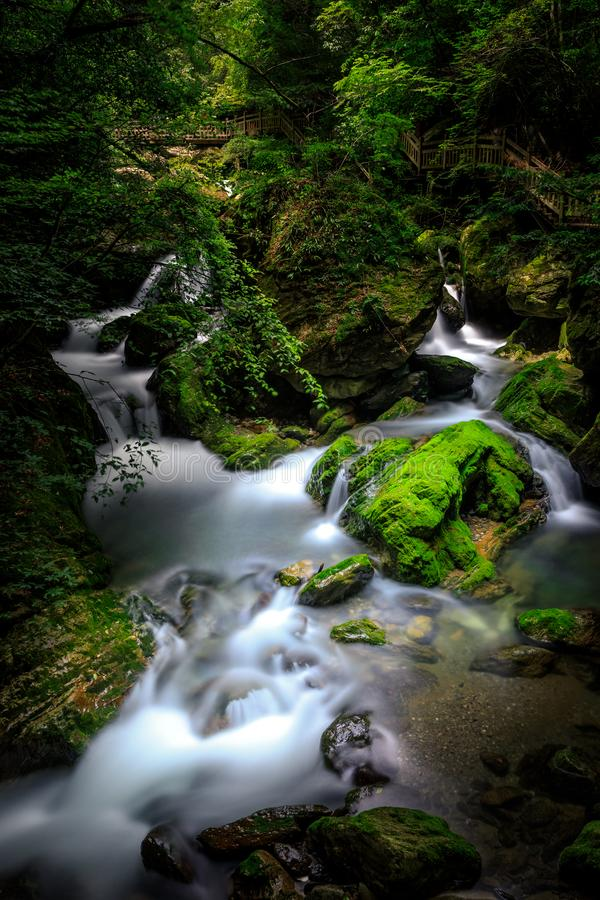 Ravine stream royalty free stock photo