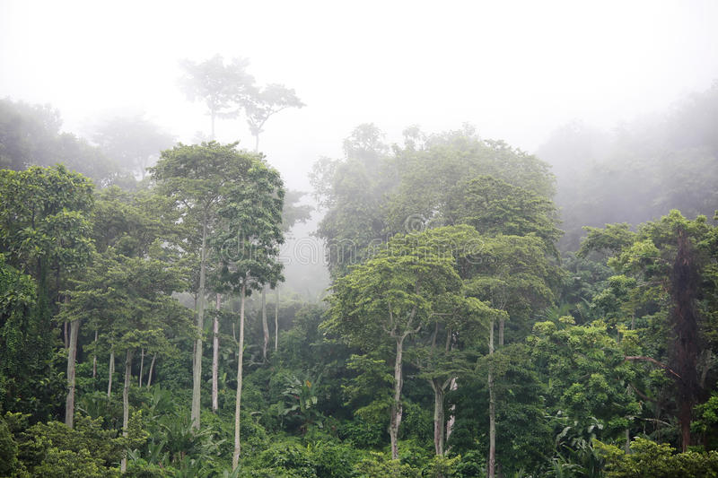 Download Raw stock photo. Image of rainforest, jungle, tropic - 14853304