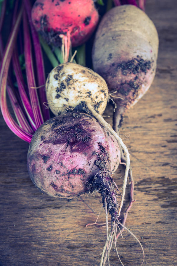 Raw beets bunch of different colors with earth and roots. On dark wooden background, toned stock image