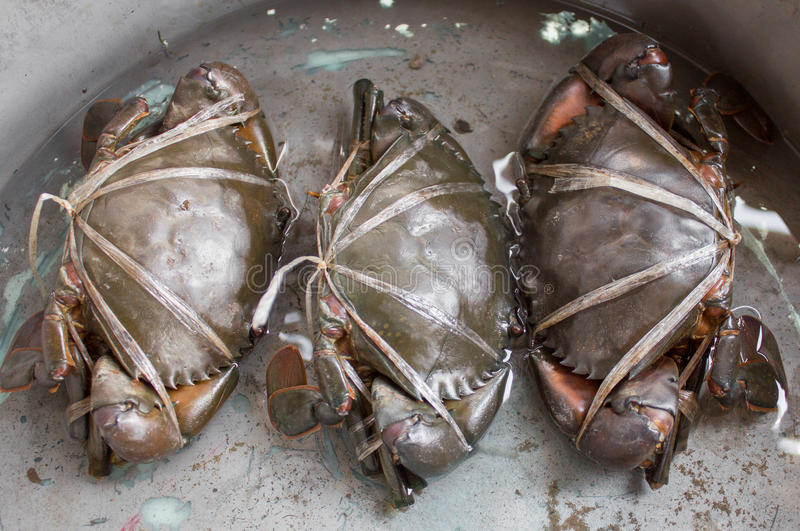 Raw black crab. Tied with plastic-ropes royalty free stock photos