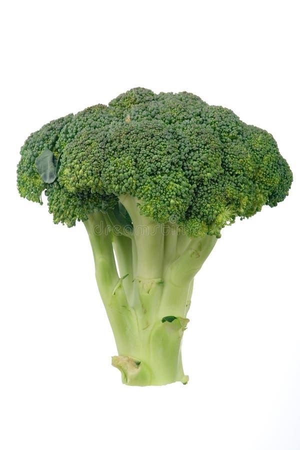 Raw Broccoli Florets Royalty Free Stock Photography