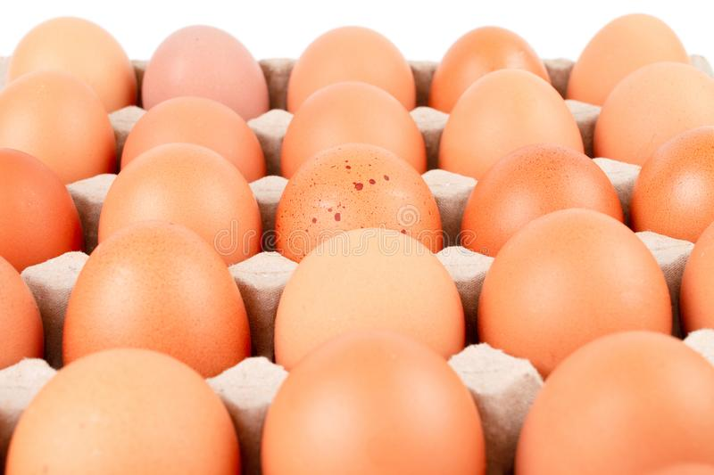 Raw brown Chicken Eggs In paper container tray box. Close up Raw brown Chicken Eggs In paper container tray box isolated on white background. The egg in the stock image
