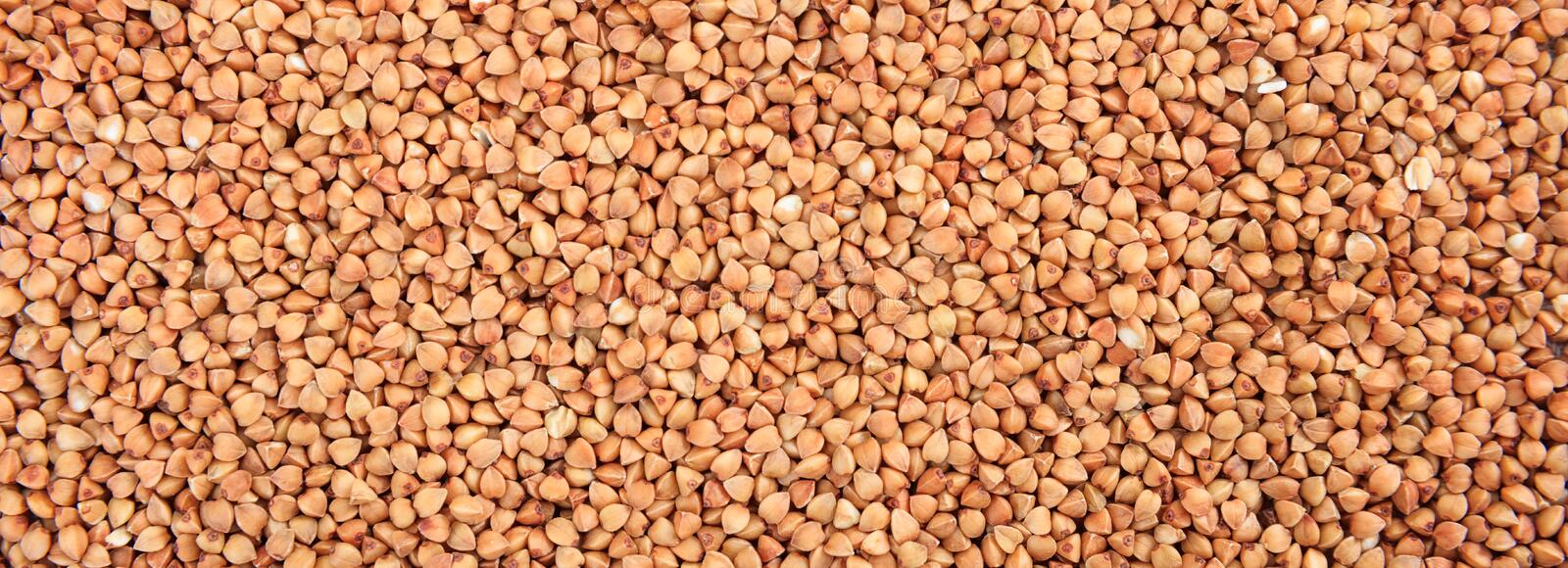 Raw buckwheat seeds full frame background, banner. Raw buckwheat dry grains full frame background, banner. Close up top view royalty free stock photos