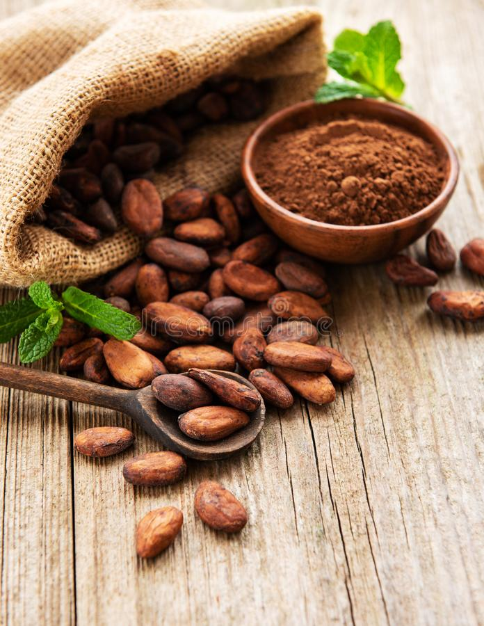 Raw cacao beans and cocoa powder. Raw cacao beans in burlap bag and bowl with cacao powder  on a wooden table stock photo