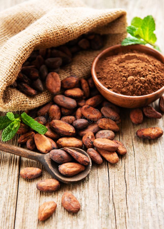 Raw cacao beans and cocoa powder. Raw cacao beans in burlap bag and bowl with cacao powder  on a wooden table royalty free stock images