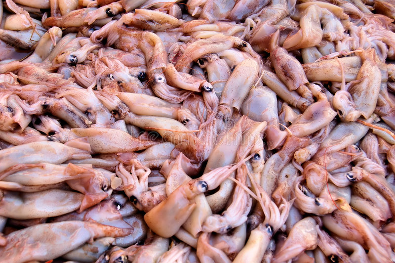 Raw calamari stock photography